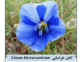 New plant species discover in North Khorasan province