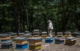 Training and equipping beekeepers in yew forests is in progress. The goal of creating jobs in this area is to protect endangered plant species like yew trees.
