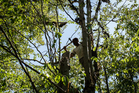 Creating new jobs in Golestan province related to tourism industry can reduce the number of people who illegally cut down yew trees in order to earn money.