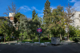 There are currently 100 squares in Narmak Neighbourhood with their green spaces.
