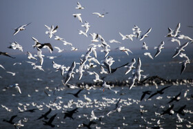 Birds migrate to Hawizeh Marshes