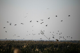 Migratory birds are seen in Hawizeh Marshes, Iran, Khuzestan province, December 26, 2018.