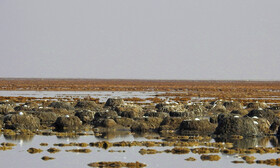 Shdegan Ponds located in Khuzestan, Iran, June 15, 2019. At this time, flamingoes incubate their eggs in Shadegan Ponds and it is estimated that the current population of flamingoes in the wetland, which is 6,200, will be increased to 7,000.