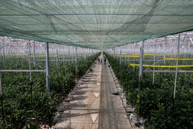 The biggest and most advanced hydroponic greenhouse of the Middle East is seen in the photo, Aras Free Trade-Industrial Zone, Jolfa, East Azerbaijan Province, Iran, July 16, 2019.
