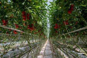The biggest and most advanced hydroponic greenhouse of the Middle East is seen in the photo, Jolfa, Aras Free Trade-Industrial Zone, East Azerbaijan Province, Iran, July 16, 2019.