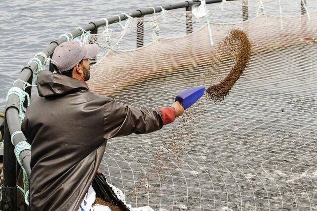 FAO highlights great potential of genetic improvements in aquaculture for better food security