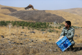 Releasing 60 predatory birds in the wild, Hamedan, Iran, September 18, 2019.