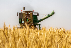 Harvesting wheat in Bushehr, Iran, May 2, 2020.
