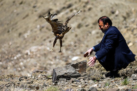 A migratory bird is released into the wild, Hamedan, Iran, May 9, 2020.
