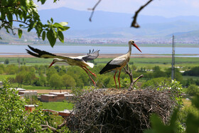 The lives of storks in Darreh Tefi Village, Kurdistan, Iran, May 10, 2020. Darreh Tefi Village, located in Marivan City of Iran's Kurdistan Province, plays host to flocks of storks every year.