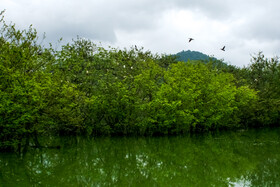 Estil Wetland is seen in the photo, Gilan, Iran, June 21, 2020.