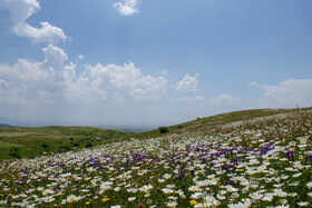 """Camomile Plain is seen in the photo, Ardebil, Iran, July 7, 2020. After crossing the Caspian Sea and Heyran Gorge in Gilan Province, Fandoqlu Forest of Ardebil Province can be seen, in which a beautiful place called """"Camomile Plain"""" has been located."""