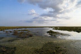 """A constructed wetland of """"Torkaman Sahra Plain"""" is seen in the photo, Golestan, Iran, July 31, 2020."""