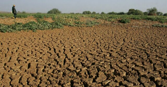 FAO supports Iran to strengthen its national agricultural drought monitoring, early warning systems