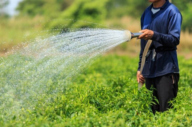 FAO boosts Iranian experts' knowledge of agricultural water saving, water productivity