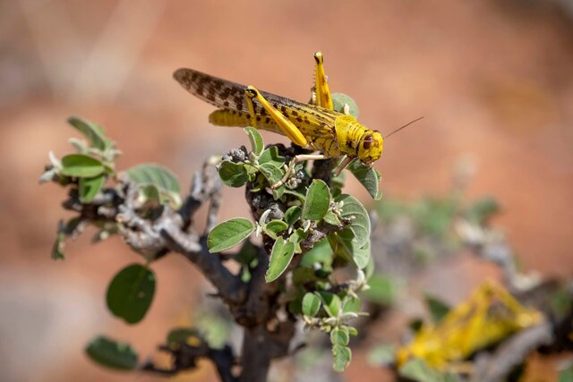 FAO provides Iran with additional pesticide sprayers, supporting it in fighting against Desert Locust