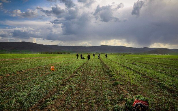 FAO empowers Iranian farmers to improve agriculture water productivity