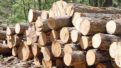 timber-1353060798-3869-th3