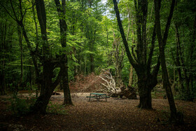 'Alangdarreh Forest Park' is seen in the photo, Gorgan, Iran, September 5, 2020. The Forest Park was reopened last week after restrictions of coronavirus were lifted.