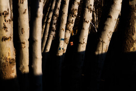 A person walks through the forest, Iran, March 4, 2020. The deforestation rate in Iran is more concerning compared to the rate in the world.