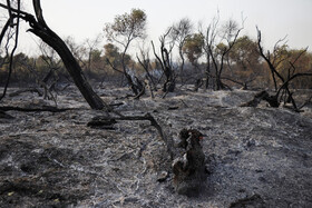 Fire crews, local people try to extinguish fires in 'Karkheh Nature Reserve'