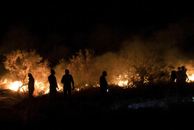 Persian fallow deer safe after fire extinguished