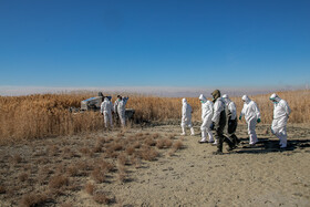 Head of Iran Veterinary Organization visits Meighan Wetland to see how well the bird flu is controlled in the wetland, Markazi province, Iran, January 6, 2021.