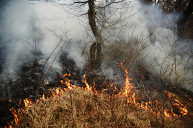 Fire burns five hectares of forests in Mazandaran